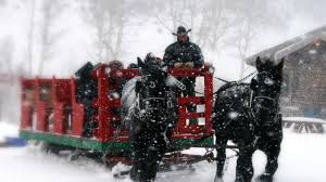Bearcat Stables Sleigh Ride – Edwards, CO